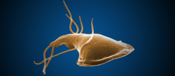 Giardia- Photo CDC website
